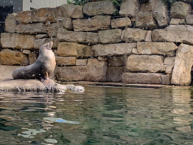 Sandstone Boulders - Dublin Zoo Project