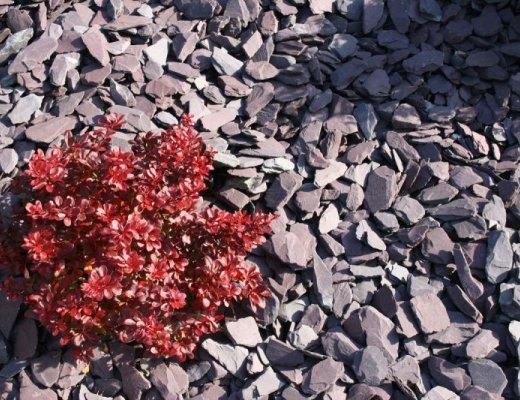 Plum Slate Mulch